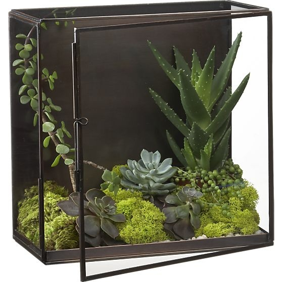 Nalini Shadow Box - Terrarium | Crate and Barrel. This steel and glass greenhouse is a freestanding box with hinged door and a removable plant tray. The 12-inch-square box is six inches deep and can be hung on a wall for display.  Like a modern Wardian case. A display idea for indoor plants / houseplants.