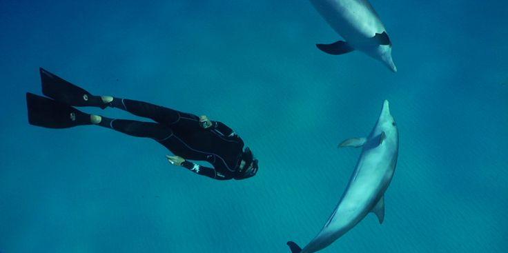 Cette année, j'ai découvert l'apnée. En Indonésie, puis en Méditerranée. En anglais, on dit 'freediving', la plongée libre... J'adore ! Retenir son souffle La vie est pleine de surprises. Moi,la plongeuse bouteille qui aime tant faire des bulles, j'ai appris à faire un truc inédit, incroyable : me passer de détendeur et ne plus respirer sous l'eau ! Eh oui, cette année, je me suis mise à l'apnée ! En anglais, on appelle çafreediving :laplongée libre. J'...