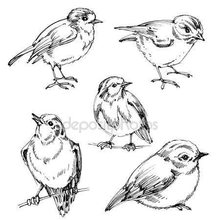Letöltés - Madarak set. Kézzel rajzolt aranyos madarak, fekete körvonalak színezés — Stock Illusztráció #127863388