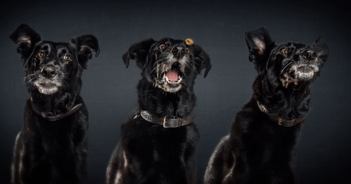 Photographer Captures Super Funny Photos Of Dogs As They Try To Catch Treats :http://gossfeed.com/2016/10/04/funny-dog-photos-catching-treats/