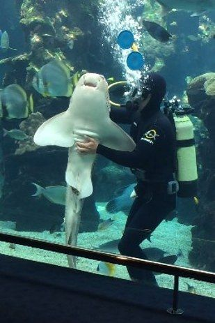 This Happy Shark Getting A Belly Rub Like A Dog Will Make Your Whole Day