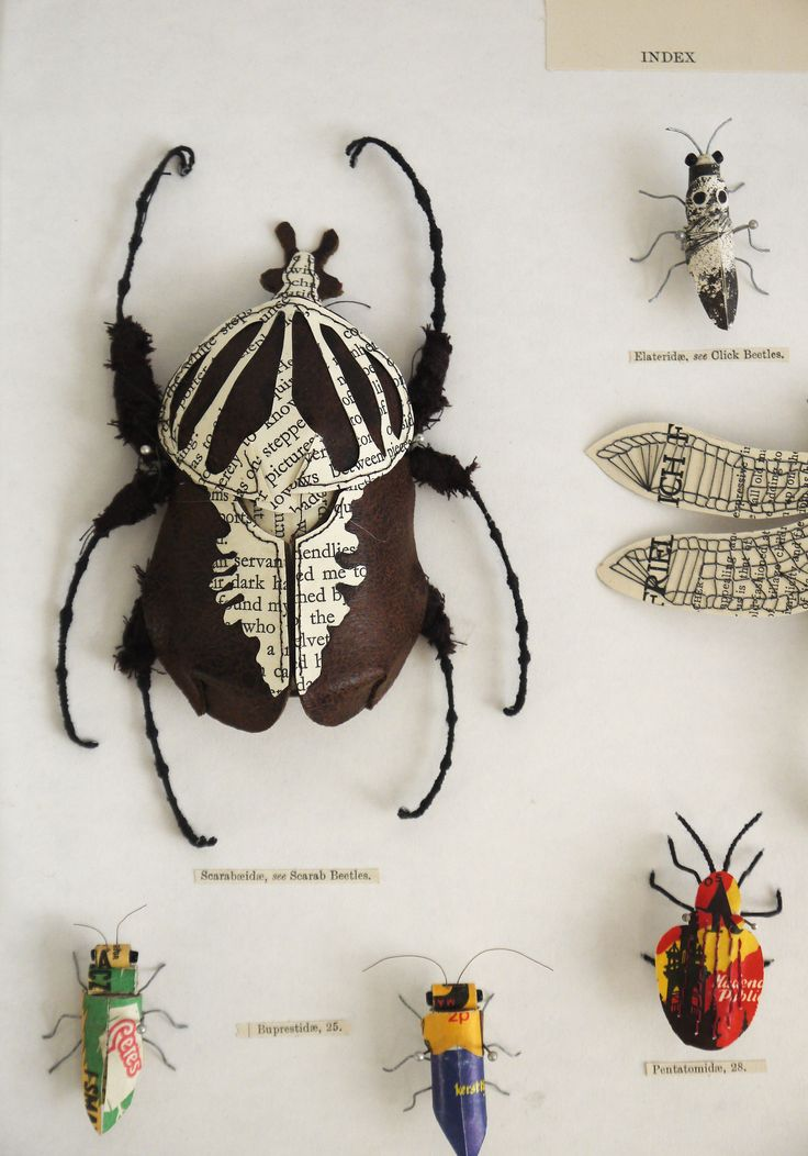 Paper Insect Display - Kasasagi