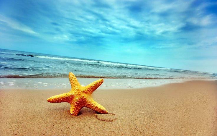 Gambar-Gambar Bintang Laut | Wallpapersforfree