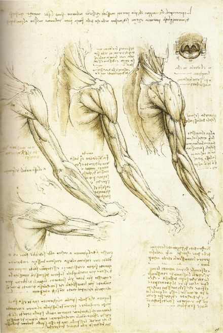 This is another painting that shows how advanced people from the renaissance were. This picture shows the arms muscles and tissues in accurate detail.