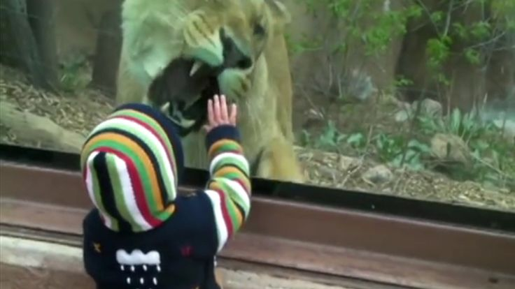 Lion Wanna Eat a Baby at The Zoo !! | Compilation