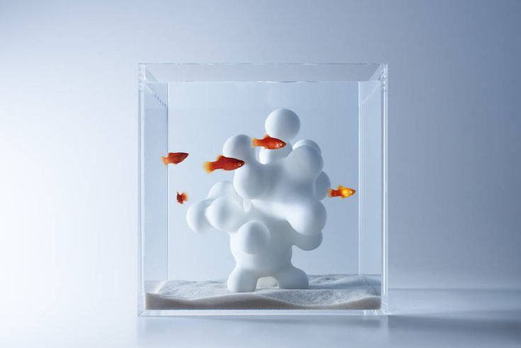 Modern Sculptural Fish Tanks