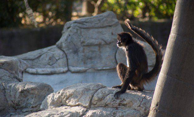 Proporciona Zoológico de San Juan de Aragón rehabilitación integral a animales rescatados en operativo