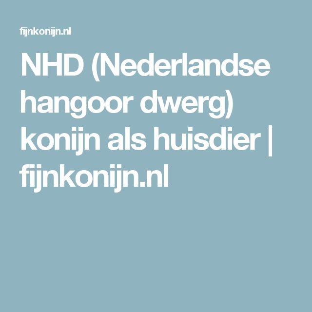 NHD (Nederlandse hangoor dwerg) konijn als huisdier | fijnkonijn.nl