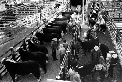 The National Western Stock Show in Denver is one of my favorite places to go in January.