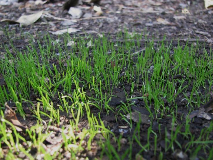 Vegetable Planting Dates for South Carolina | Garden Guides