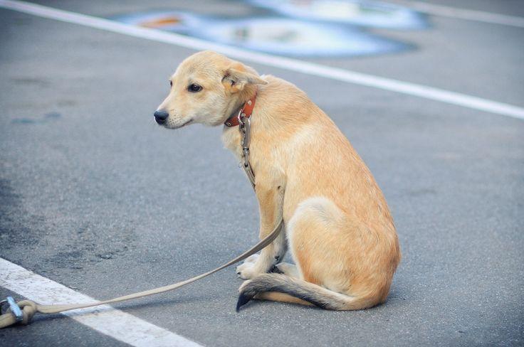 """Принцесса. Собака, сука, метис, около 3 мес. Тема на форуме Благотворительного Фонда """"Сохрани Жизнь"""" - http://save-life.me/forum/viewtopic.php?f=22&t=3890 . Нашла Дом!"""