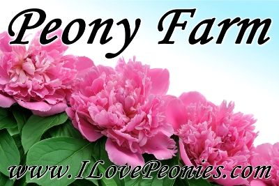 Peony Farm - the 1st & ONLY in the Peninsula