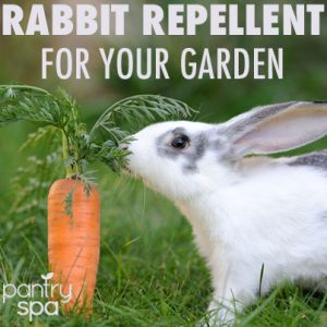Deer rabbit repellent spray diy natural garden remedies - How to keep deer out of garden home remedies ...