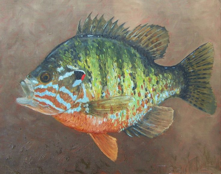 Red-eared sunfish I painted in 2008(?)