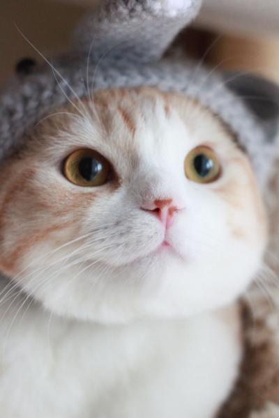 dreamyChubby Cat, Kitty Cat, Adorable Cat, Cat Leaves, Cutest Cat, Cutest Kittens, Persian Cat, Cat Lady, Dreamy Cat