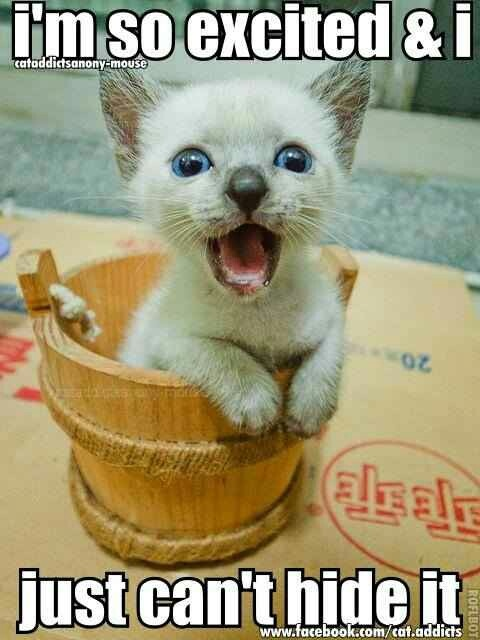 Funny Excited Face Meme : I m so excited funny cat pictures pinterest