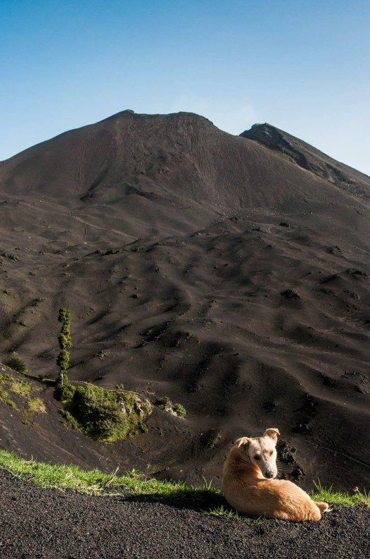 Pacaya-volcan-chien-bis