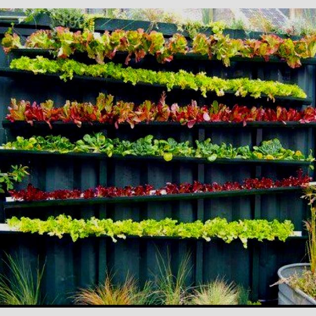 Simple Wall Gardening Ideas