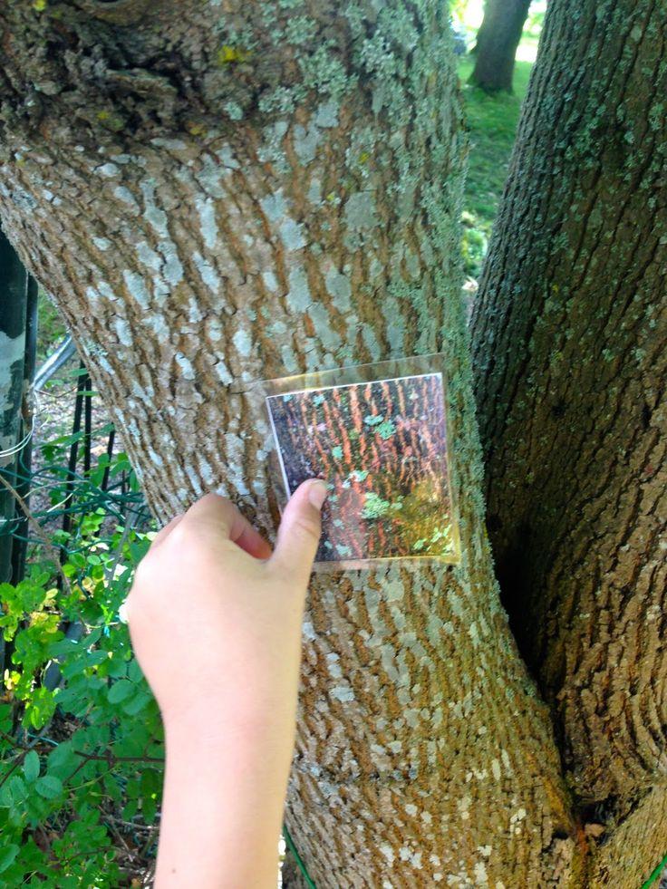 Open ideat: Metsä-teema osa 2