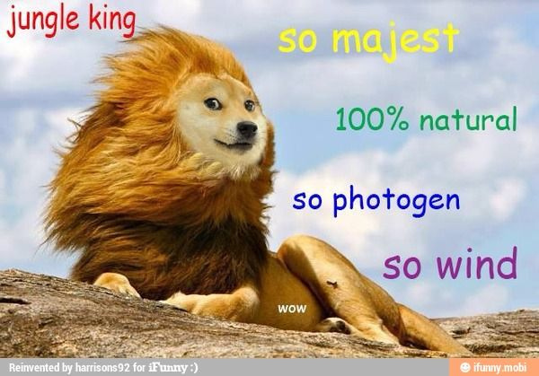 Ha i love the doge meme