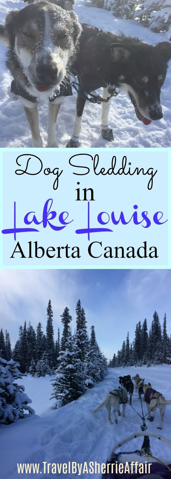 Lots of fun to be had when you go dog sledding at Lake Louise in Alberta Canada! They are amazing and fit animals, all very friendly. Your trip through the woods will have you seeing a winter like you never have before.  Breathtaking views.   #LakeLouise #Dogsledding #winterfun #wintertrip #motherdaughter #holiday #travel #wintervacation #winteractivities #snowfun #snowactivites #outside #Fairmonthotel #Fairmontchateulakelouise