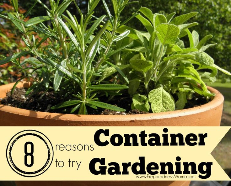 best container vegetable gardening ideas on, Natural flower
