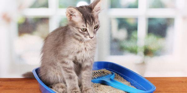 lettiera gatti #recensione #greenme