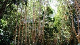 Kuranda: A village in the rainforest