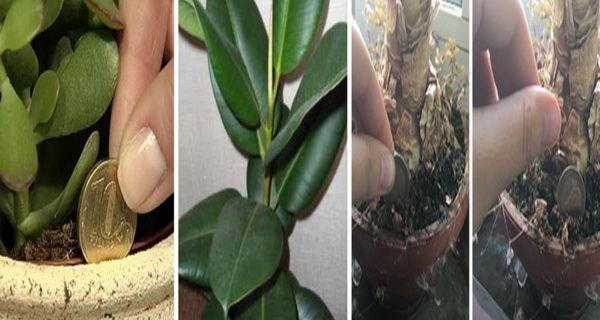 http://www.secretele.com/2016/08/ia-ti-una-dintre-aceste-plante-in-casa.html