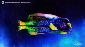 These amazing animals are really people covered in body paint - YouTube