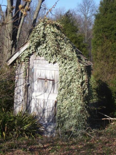 outhouse .
