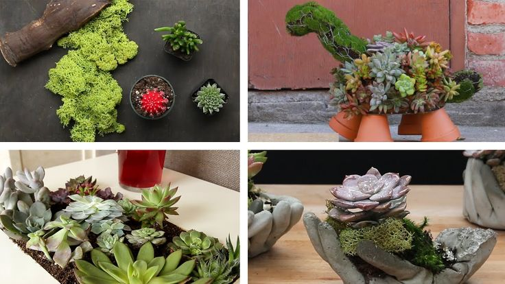 Add a little greenery to your home with these succulents.     https://www.youtube.com/watch?v=jg0EMBdV5Xw