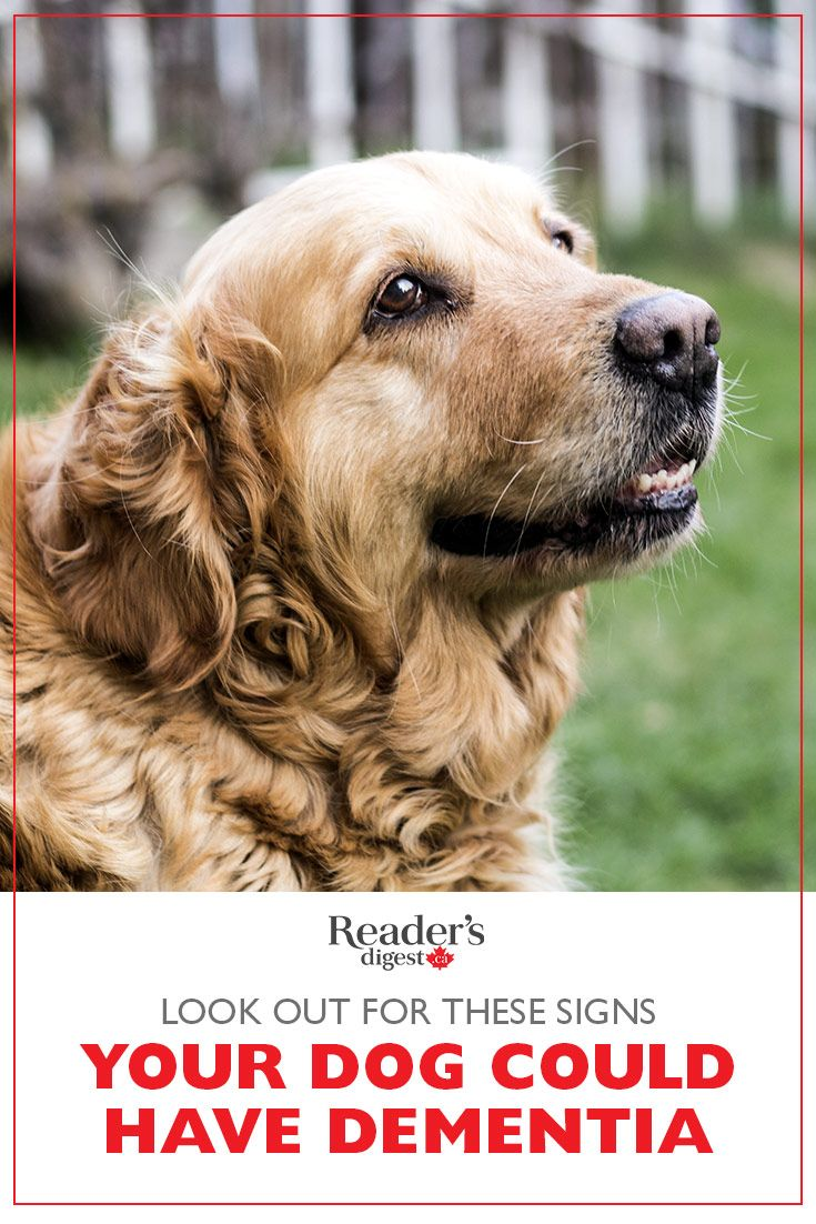 8 Signs Your Dog Could Have Dementia Dogs, Your dog