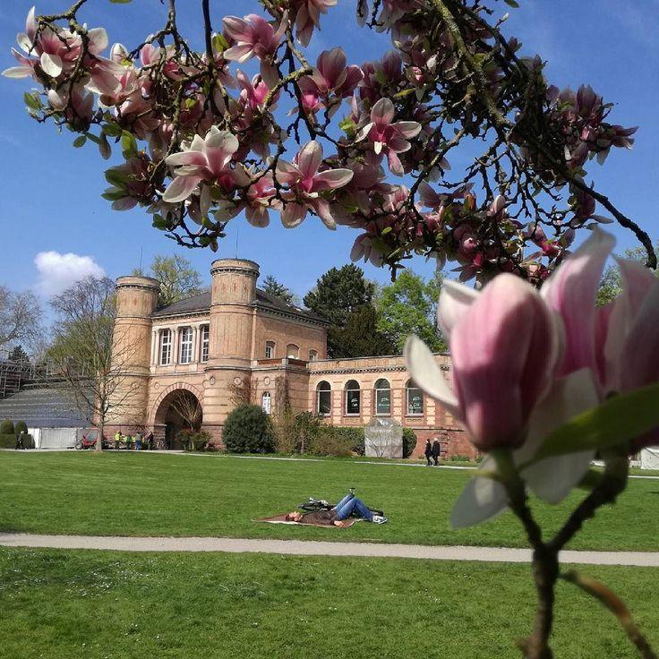 Guten Morgen #Karlsruhe! Wir wünschen Euch einen schönen sonnigen Tag  Genießt das tolle Wetter doch in eurer Mittagspause heute im Botanischen Garten da blüht im Moment alles so schön  #visitkarlsruhe #visitbawu #bwjetzt #gutenmorgen #magnolie #blütenzauber #flowerpower #Frühling #frühlingistda #springishere #springtime #explorekarlsruhe #explorethecity #travel #beautifulweather #goodmorning #sunishere #citylife