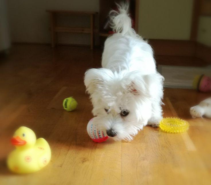 My toys.