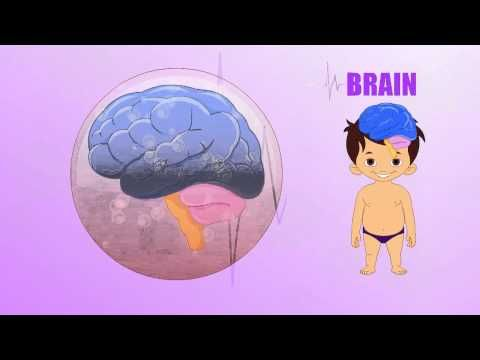 Science - Learn about Human Body Parts For Kids - BRAIN | magicboxAni, YouTube (other videos about other parts)