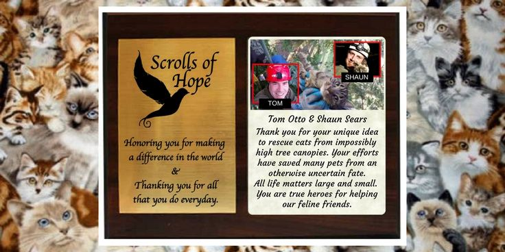 """Honoring Tom & Shaun for their #Humanity  Here is a Plaque of #Appreciation All #life matters small & #large @CanopyCatRescue #cats #pets Not just a """"Message in a Bottle' It's all about 'Connection'"""