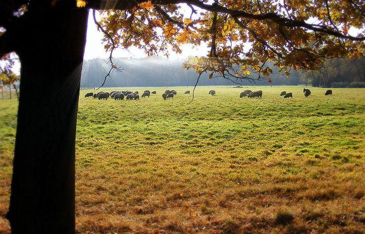 Park Krajobrazowy Dolina Baryczy, Dolny Śląsk, Poland.