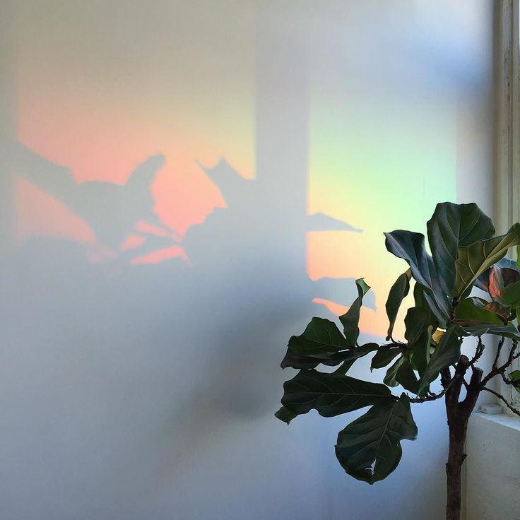 ✩ & more ★ https://fr.pinterest.com/miaprimeau/ #plant #rainbow #light
