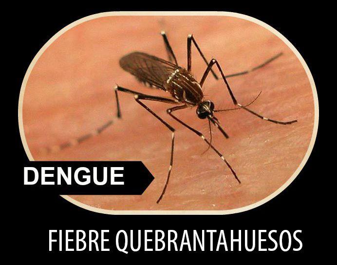 Medidas de protección y síntomas del #Dengue -¿Qué es el #dengue? ► http://akademeia.ufm.edu/home/?curso=microbiologia  #Microbiología #Picadura #Fiebre #Mosquito