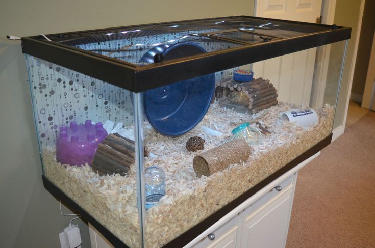 13 best things i want for my hamster images on pinterest for Fish tank for hamster