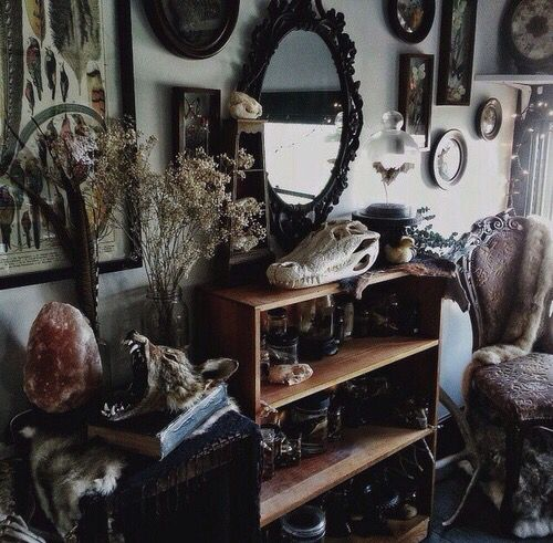 Best 25 macabre decor ideas on pinterest skull decor Oddities home decor