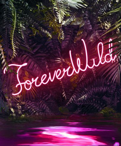 Disco in the Jungle: Forever Wild  Art Star Collection Home Collection Help
