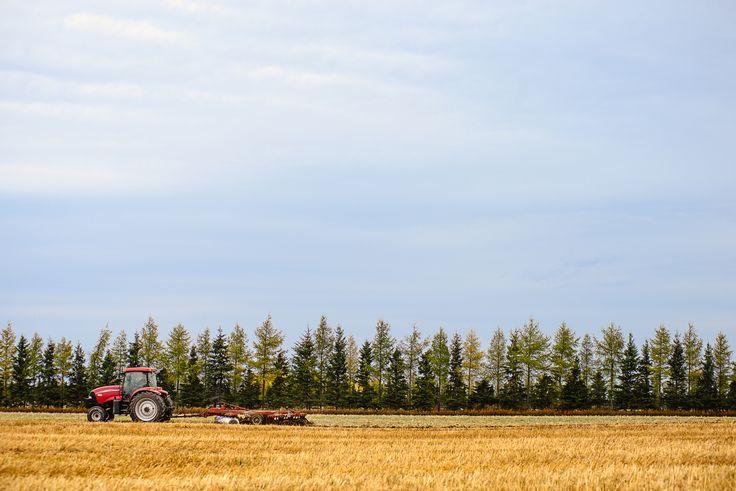 Travaux aux champs à l'automne à La Chouape Crédit: Nicolas Lévesque
