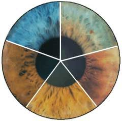 Iridology Color Table – Eye Color and What they Mean | Transforming Your Life by Using Solutions From the Laws of Nature with Esther Lamnyam