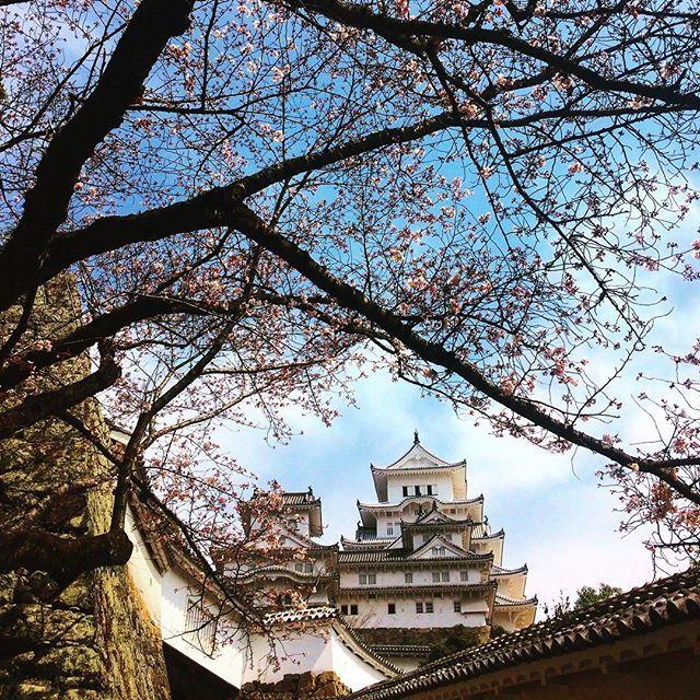 【japonima】さんのInstagramをピンしています。 《Perfecta combinación, el castillo de Himeji y los cerezos sakura en flor... #japon #japones #japan #japanese #sakura #hanami #himeji #castle #samurai #flowers #anime #manga #paz #flores #spring #日本 #姫路城 #姫路 #花見 #桜 #花 #桜の木 #春 #侍 #旅行 #travel》