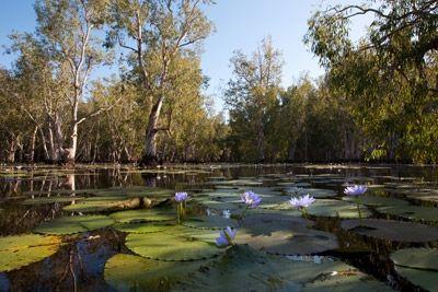 Kakadu National Park in Australia  www.transfercar.com.au