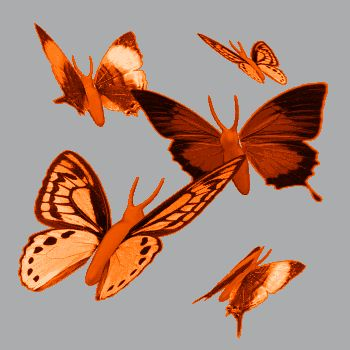 animated gif butterflies images glitter 29.gif -  album gallery,animated gif butterflies images glitter,gif blog,images friends,facebook sha...