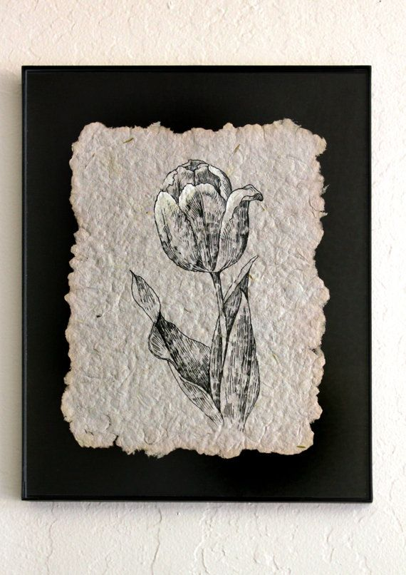 Tulip. Original Ink Drawing on Handmade paper. Botanical Charts. Art Nouveau Style. Floral Decor House Decoration. Line Drawing
