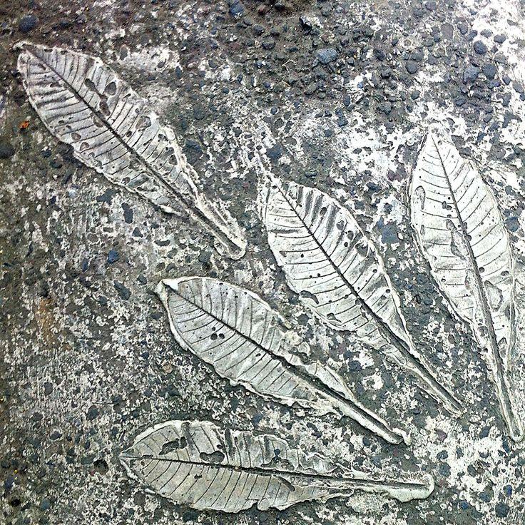 more pressed-leaf patterns